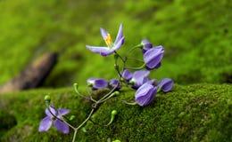 Предпосылка природы, фиолетовые цветки, фиолетовый лепесток Стоковое фото RF