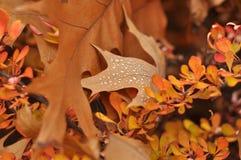 Высушенные листья с росой. Стоковые Изображения RF
