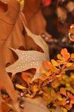 Цветастые деревья осени и высушенные листья с росой Стоковое фото RF