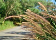 Предпосылка природы цветка травы Стоковое Изображение RF