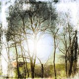 Предпосылка природы Grunge с чуть-чуть деревьями Стоковое Изображение