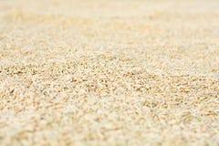 Предпосылка причиненная много рисом Стоковое Изображение RF