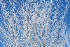 Предпосылка при ветви дерева покрытые с снегом Стоковая Фотография RF
