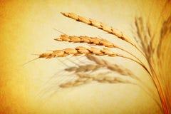 Предпосылка пшеницы абстрактная Стоковое Изображение RF