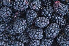 Предпосылка плодоовощ ежевики Стоковые Фото