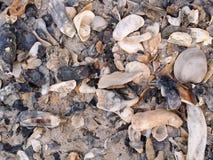 Предпосылка пляжа раковины Стоковое Изображение