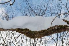 предпосылка разветвляет снежно стоковое фото rf