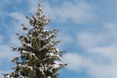 предпосылка разветвляет снежно стоковая фотография