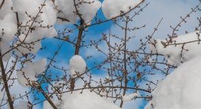 предпосылка разветвляет снежно стоковое изображение rf