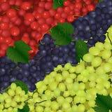 Предпосылка разных видов виноградин Стоковое фото RF