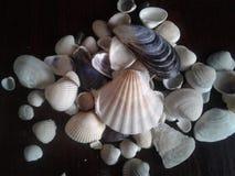 предпосылка раковина много seashells малая Стоковые Изображения RF
