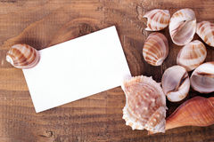 Предпосылка раковины моря Стоковое Изображение RF