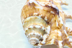 Предпосылка раковины моря Стоковые Изображения RF