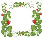 Рамка клубники флористическая Стоковые Фото