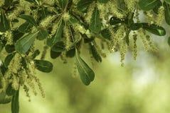 Предпосылка растительности Стоковое Фото