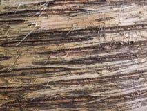 Предпосылка расшивы березы естественная Стоковые Изображения RF