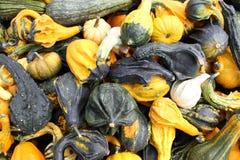 Предпосылка реальной декоративной тыквы хеллоуина Стоковая Фотография RF