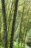 Предпосылка древесной зелени природы Стоковое Изображение RF