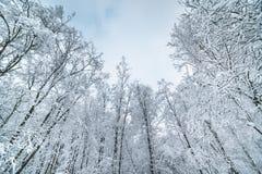 Предпосылка рождества с снежным ландшафтом елей Зима fo Стоковые Фотографии RF