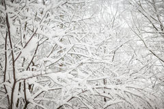 Предпосылка рождества с снежным ландшафтом елей Branc ели Стоковые Изображения RF