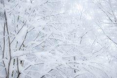 Предпосылка рождества с снежным ландшафтом елей Branc ели Стоковые Изображения