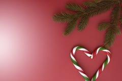 Предпосылка рождества с twings ели и тросточками конфеты на красном цвете Взгляд сверху, плоское положение Скопируйте космос для  Стоковое Изображение RF