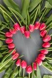 Предпосылка розового свежего искусства тюльпанов весны ботанического флористическая венок рамки сердца цветет поздравительная отк Стоковые Фото