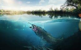 Предпосылка рыбной ловли стоковое изображение