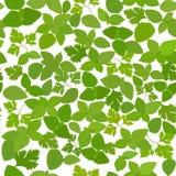 Предпосылка свежих трав безшовная с базиликом, мятой, петрушкой Иллюстрация штока