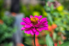 Предпосылка свежих цветков outdoors в парке острова Бали, Индонезии Предпосылка природы флористическая Стоковые Фотографии RF