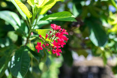Предпосылка свежих цветков outdoors в парке острова Бали, Индонезии Предпосылка природы флористическая Стоковые Изображения
