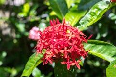 Предпосылка свежих цветков outdoors в парке острова Бали, Индонезии Предпосылка природы флористическая Стоковое Изображение RF