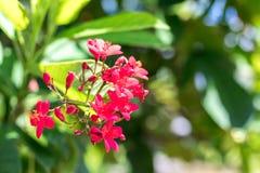 Предпосылка свежих цветков outdoors в парке острова Бали, Индонезии Предпосылка природы флористическая Стоковая Фотография