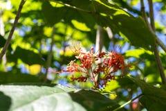 Предпосылка свежих цветков outdoors в парке острова Бали, Индонезии Предпосылка природы флористическая Стоковые Фото