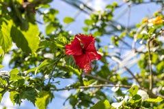Предпосылка свежих цветков outdoors в парке острова Бали, Индонезии Предпосылка природы флористическая Стоковое Изображение