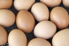 Предпосылка свежих яичек Стоковое Изображение