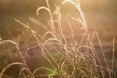 Предпосылка света заморозка травы захода солнца Стоковая Фотография RF