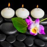 Предпосылка свечей строки белых, dendrobium курорта цветка орхидеи Стоковое Изображение