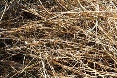 Предпосылка сена и соломы Стоковая Фотография RF