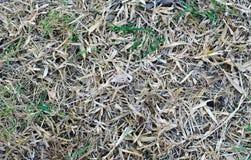 Предпосылка сена Стоковое Фото