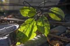 Предпосылка серого цвета с зелеными листьями Стоковая Фотография RF