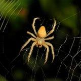 Предпосылка сети паука на ноче Стоковая Фотография RF