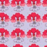 Предпосылка сирени безшовная с орхидеями Стоковое Изображение RF