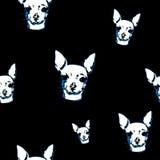 Предпосылка собаки чихуахуа безшовная Стоковые Изображения RF