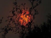 предпосылка солнечная Стоковые Фотографии RF