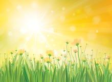 Предпосылка солнечности вектора с желтыми цветками. бесплатная иллюстрация