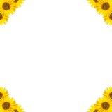 Конструкция границы солнцецвета Стоковые Фотографии RF