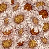 Предпосылка, солнцецвет Стоковое Изображение