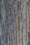 Предпосылка старой коры дерева Стоковая Фотография
