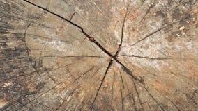 Предпосылка ствола дерева Стоковое Изображение RF